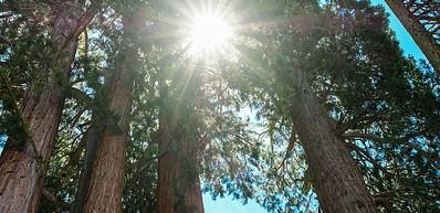 Parques nacionales de Sequoia y Kings Canyon