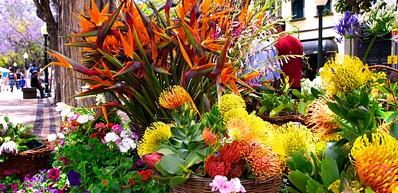 Flower Festival (Madeira)