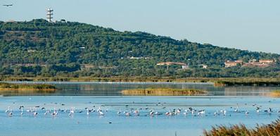 Sott'acqua e su terra: la salvaguardia della natura