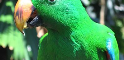 Cairns Rainforest Dome