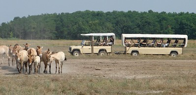 Hortobágy Wildpark – Puszta Safari