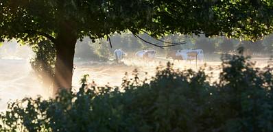 Музеи и сады Фредриксдаля