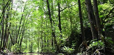 Mangrove Nature Reserve / 红树林自然保护区