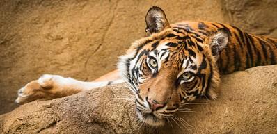 Frösö Zoo