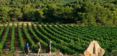 Le vignoble d'Hérault Méditerranée