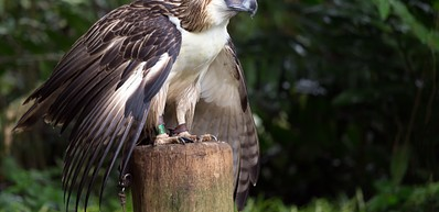 Philippine Eagle Conservation Centre