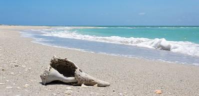 Cayo Costa Island State Preserve