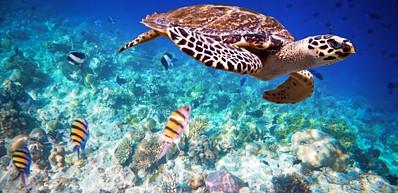 Mnarani Marine Turtle Conservation Pond (Nungwi)