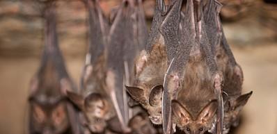 Visit Nivida Bat Cave