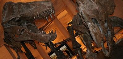 Museu de História Natural do Condado de Los Angeles