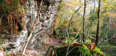 Ness Wood