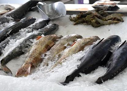 Central Fish Market - Jeddah - Arrivalguides.com