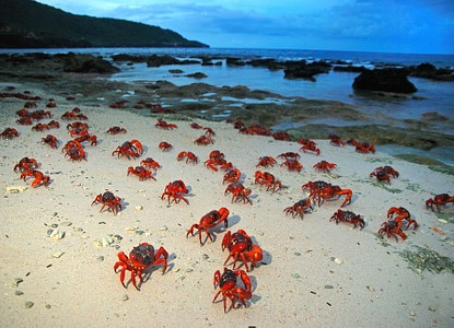The Best Travel Guide to Christmas Island