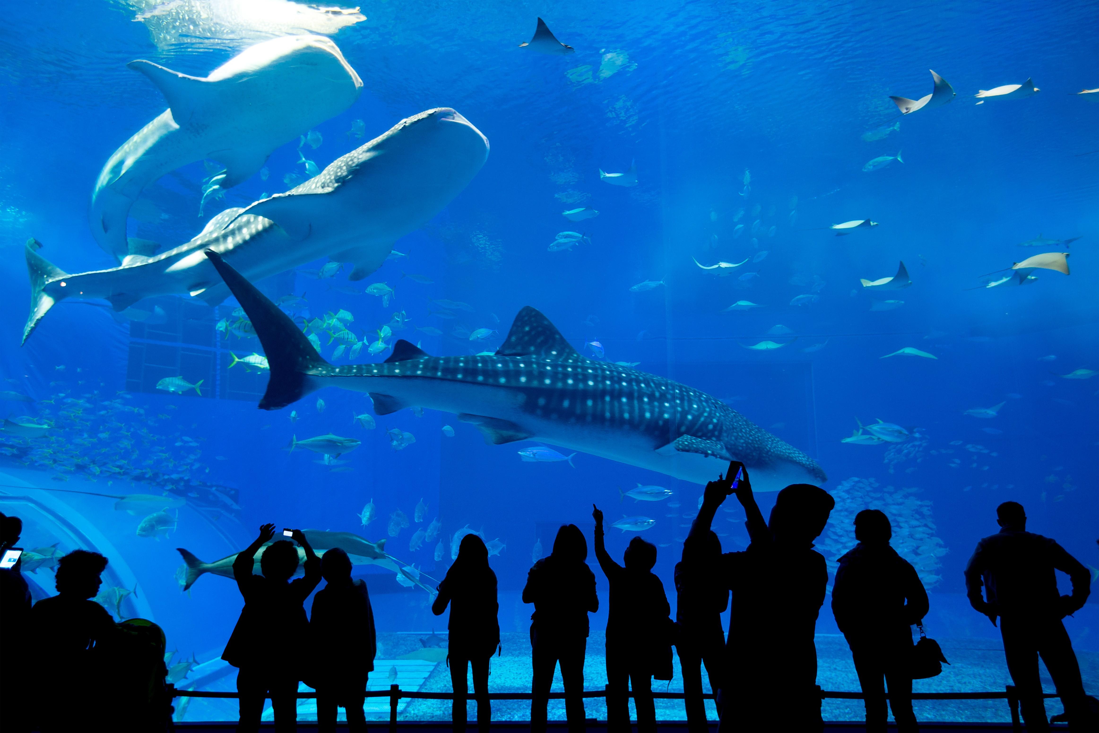 Underwater World Langkawi - Langkawi - Arrivalguides.com